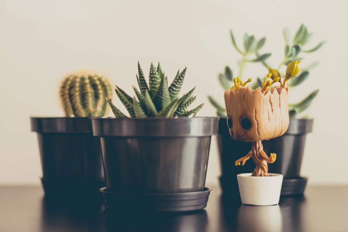 Three cactus or succulent plants with a Funko Pop Groot